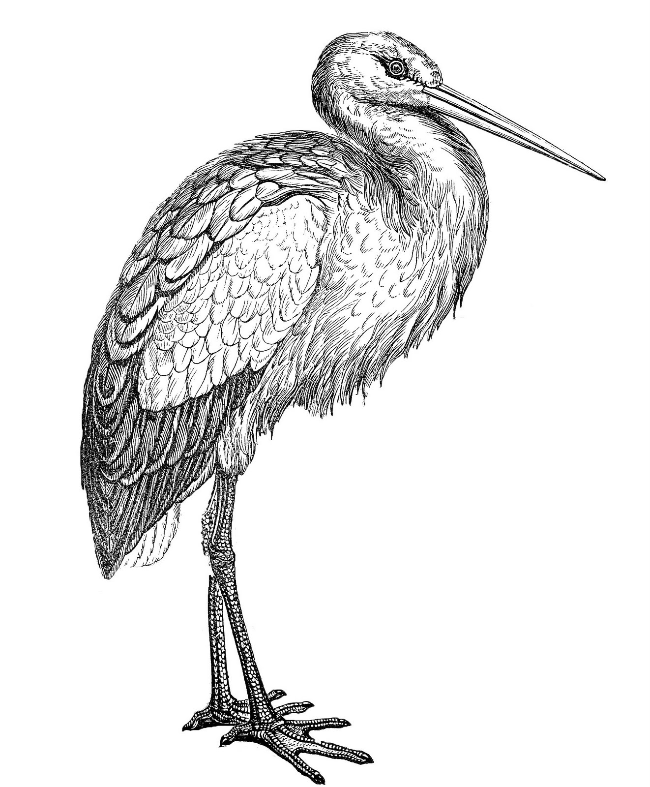 Vintage stork clipart picture free library Vintage Clip Art - Black and White Stork - The Graphics Fairy picture free library