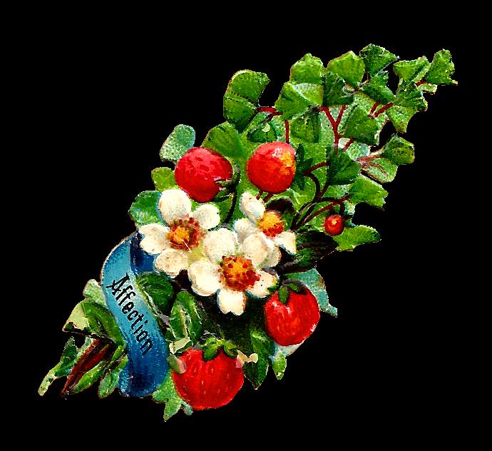 Strawberry flower clipart banner transparent Antique Images: Free Flower Clip Art: White Rose and Strawberry Clip ... banner transparent