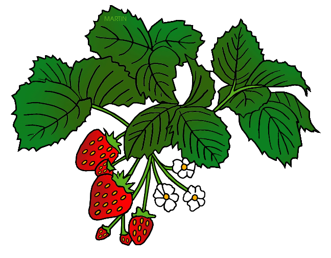 Strawberry flower clipart svg library library United States Clip Art by Phillip Martin, State Fruit of Oklahoma ... svg library library