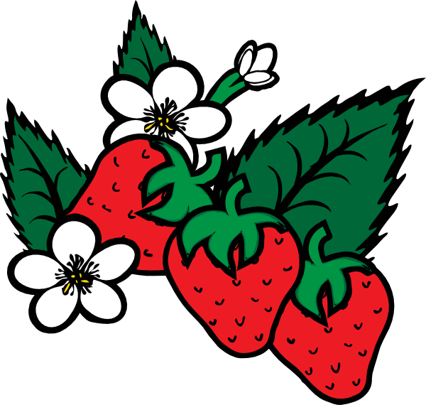 Strawberry flower clipart transparent stock Strawberry Vine Drawing at GetDrawings.com | Free for personal use ... transparent stock