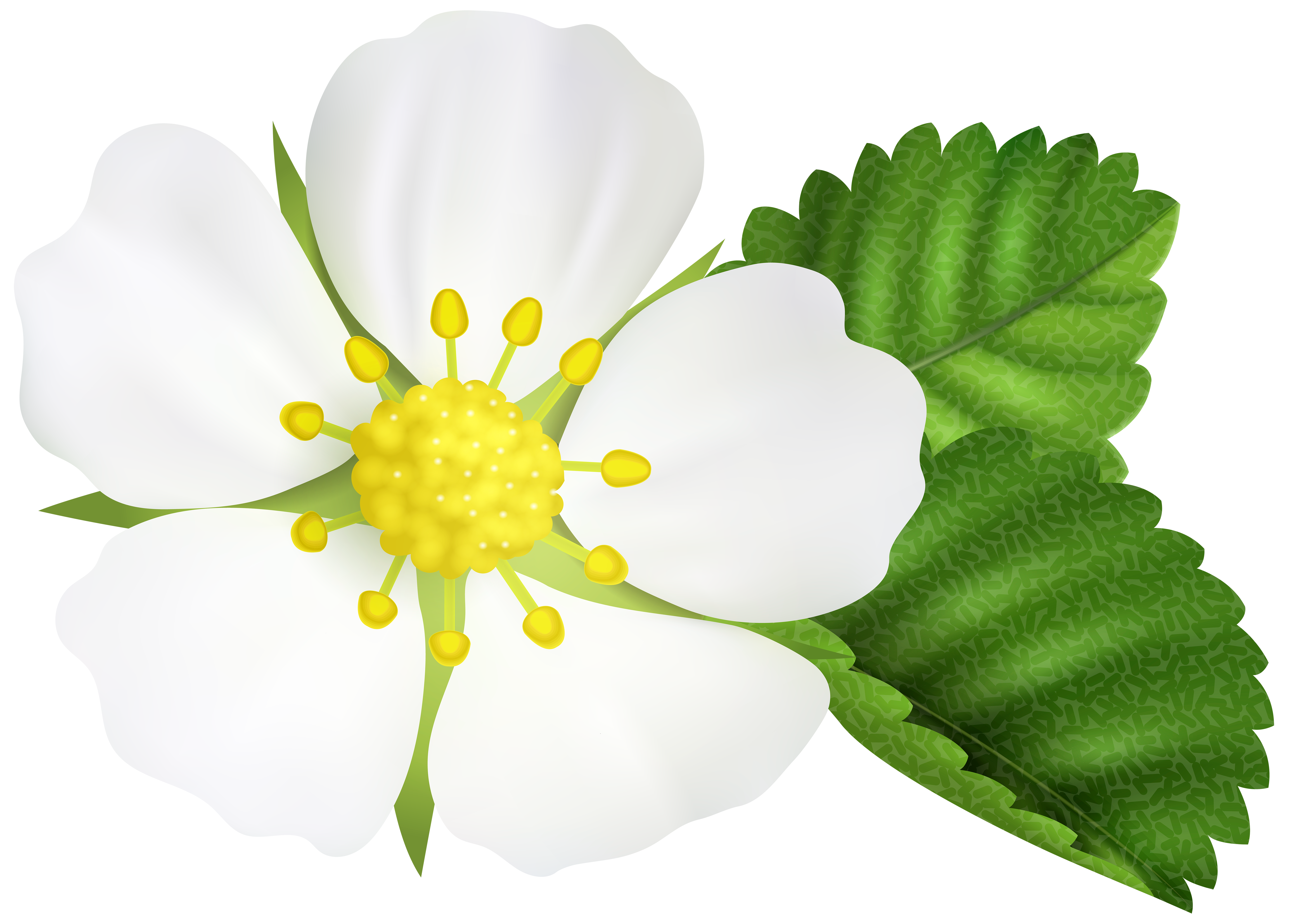 Strawberry flower clipart clip art royalty free Strawberry Flower PNG Clip Art Image | Gallery Yopriceville - High ... clip art royalty free