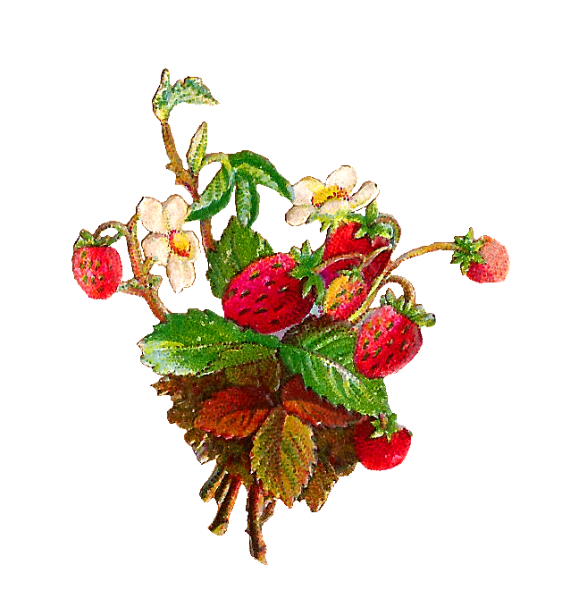 Strawberry flower clipart picture library stock Antique Images: Free Fruit Clip Art: Strawberries and Strawberry ... picture library stock