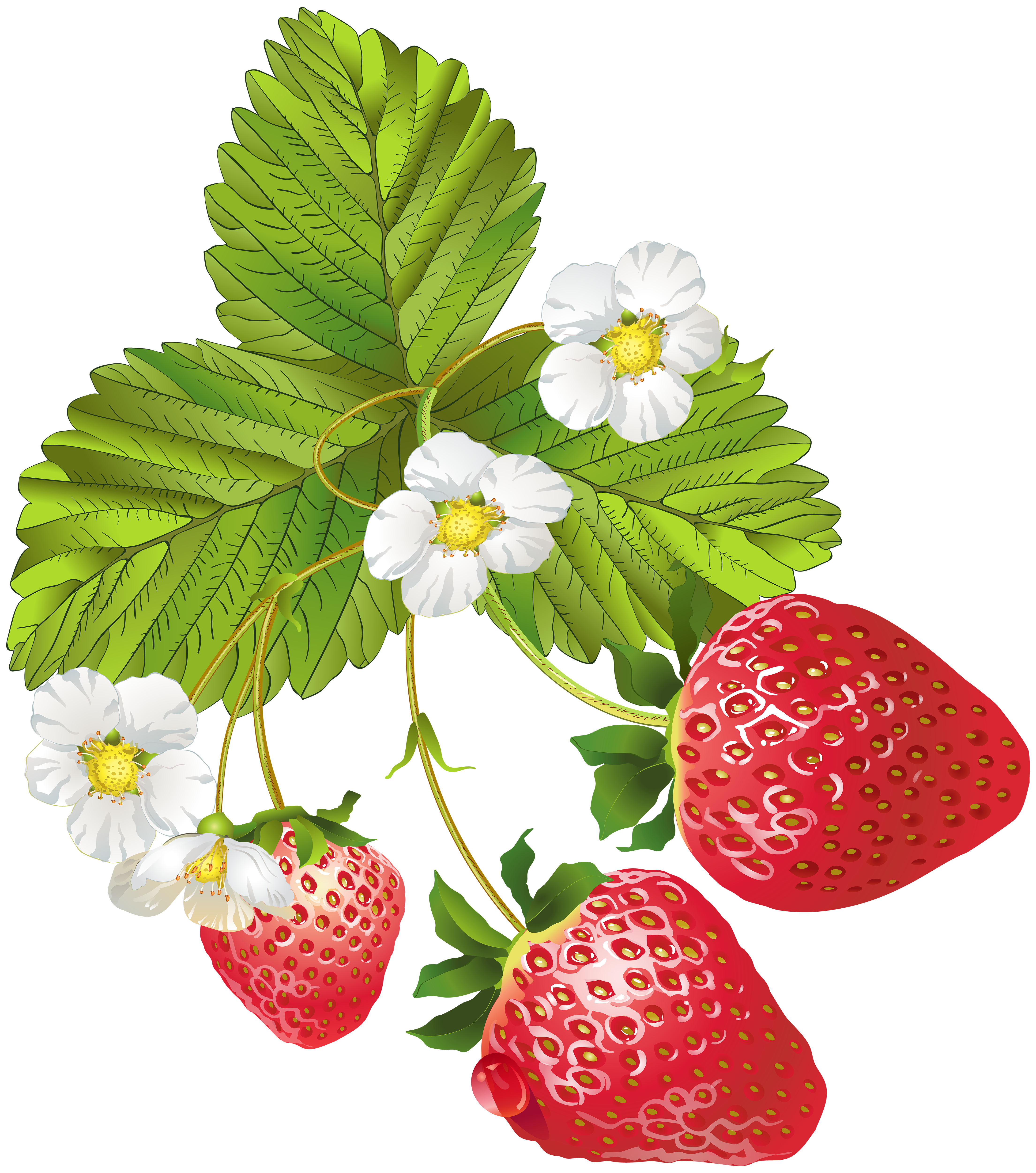 Strawberry flower clipart freeuse Blooming Strawberries PNG Clip Art Image | Gallery Yopriceville ... freeuse