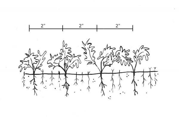 Stretch & grow black and white clipart png library library 18. Plants Grown in Containers   NC State Extension Publications png library library