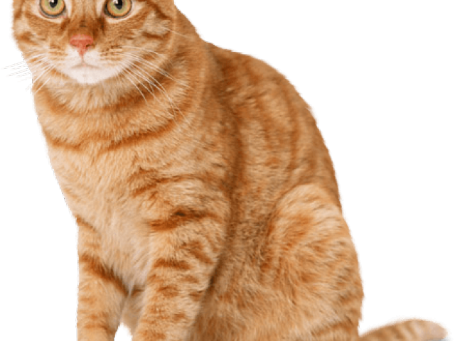 Striped cat clipart clipart freeuse stock Tabby Cat Clipart ginger cat - Free Clipart on Dumielauxepices.net clipart freeuse stock
