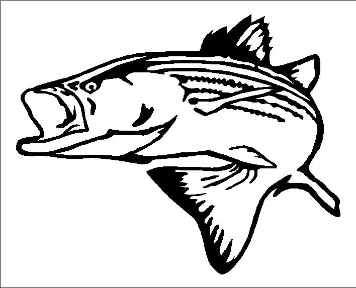 Striper clipart picture download Free Striped Bass Cliparts, Download Free Clip Art, Free ... picture download