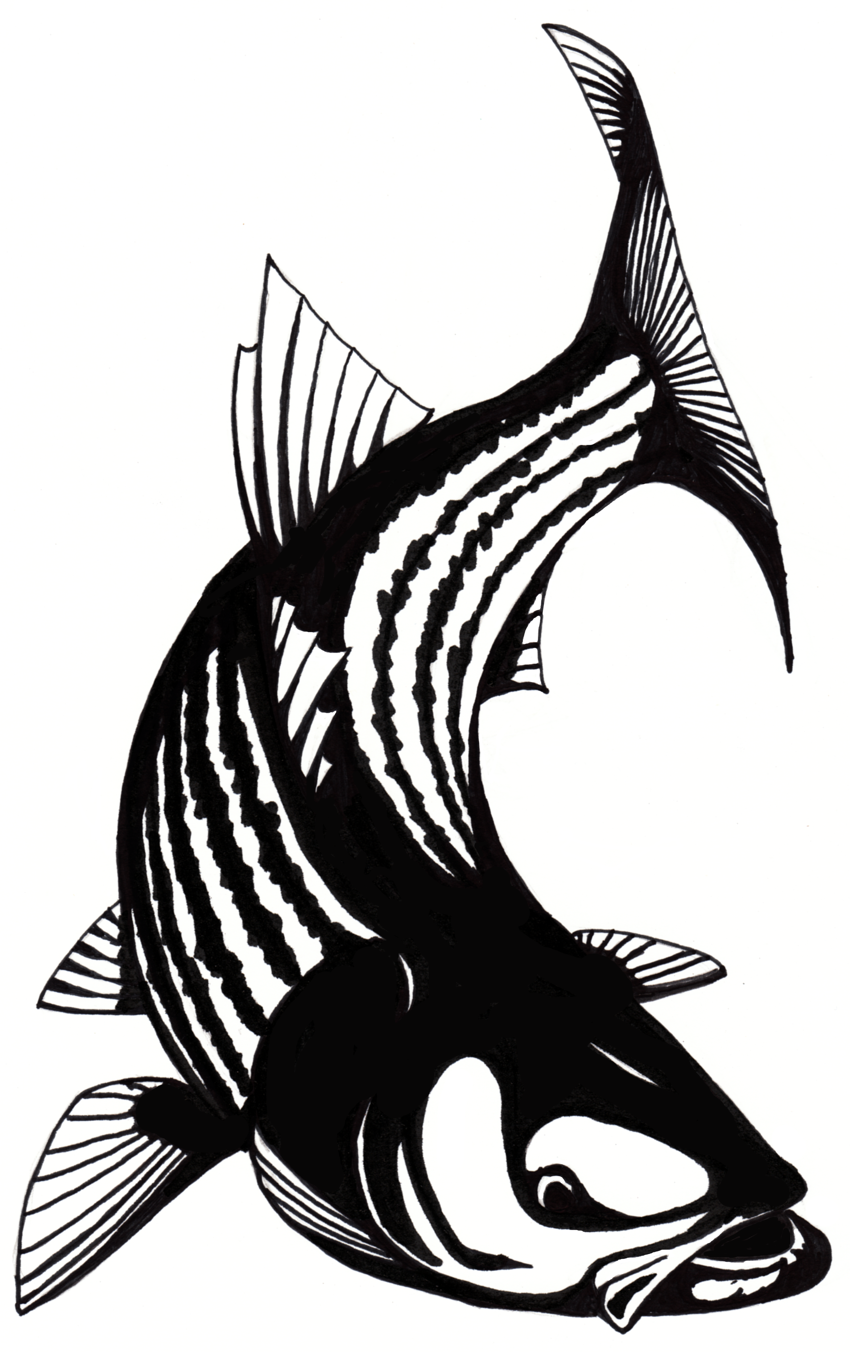 Striper clipart jpg library library Free Striped Bass Cliparts, Download Free Clip Art, Free ... jpg library library