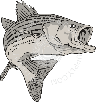 Striper clipart png freeuse download Leaping Striper Fish in Black and White png freeuse download