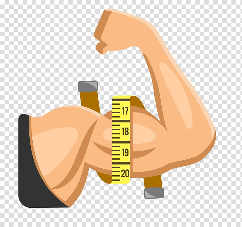 Strong girl-s arm clipart clip art transparent download Person measuring muscle arm illustration, Arm Muscle Limb ... clip art transparent download