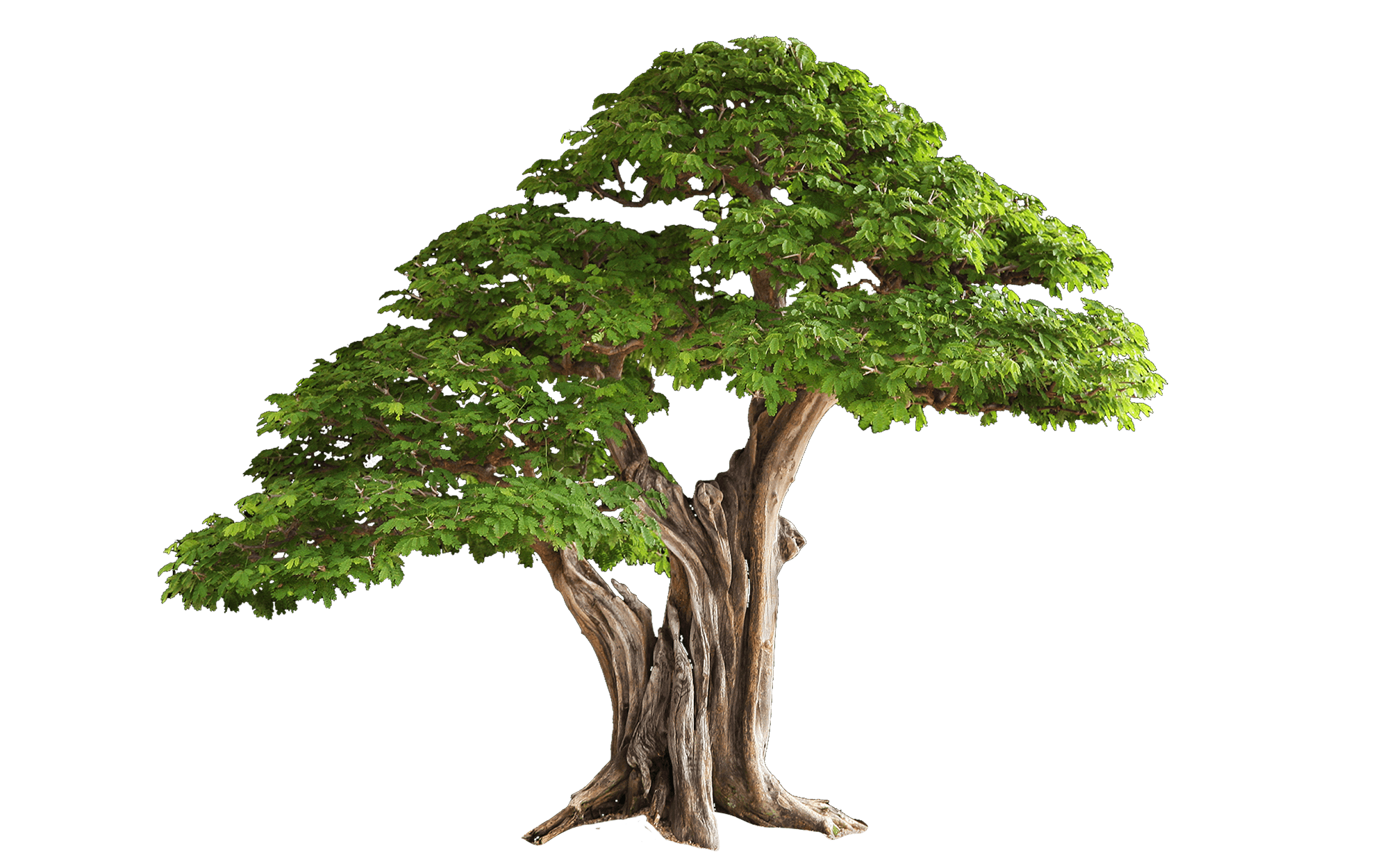 Strong tree clipart jpg black and white stock Tree jpg black and white stock