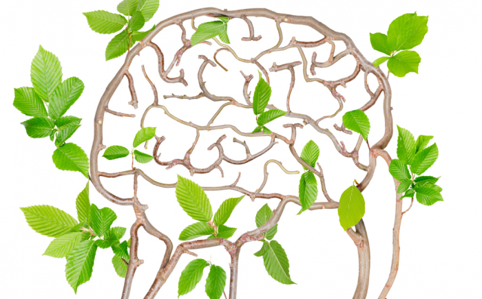 Stuck brain clipart png free The Resilient Brain: 9 Keys to Prepare the Brain for Healing ... png free
