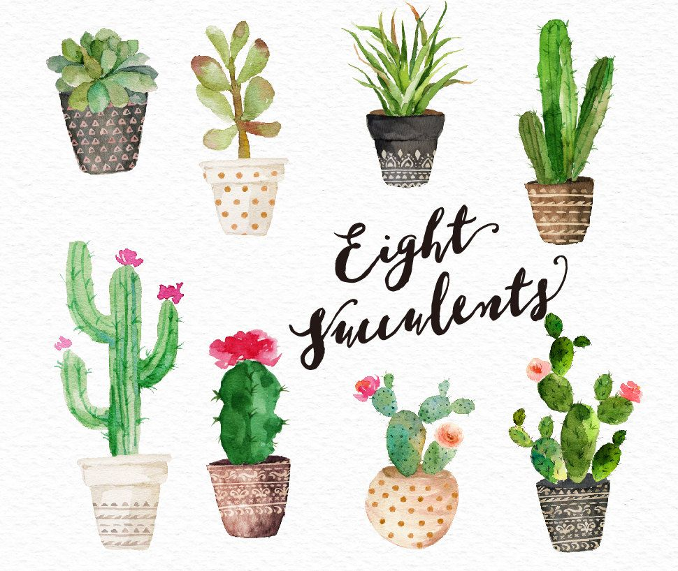 Succulents clipart graphic royalty free library Watercolor succulent clip art collection /Small Set/Digital ... graphic royalty free library