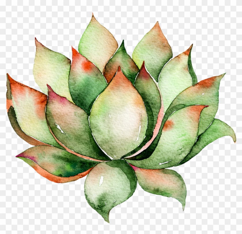 Succulent clipart download vector free stock Watercolor Succulent Png Clip Art Download, Transparent Png ... vector free stock