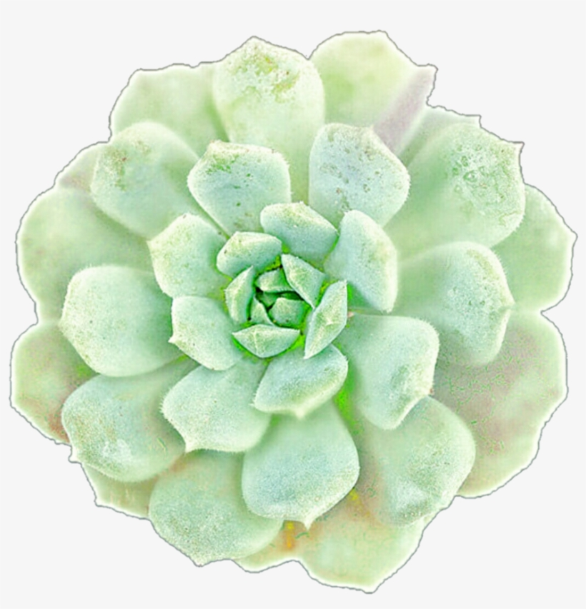 Succulents clipart clip art royalty free stock Picture Black And White Library Succulents Clip Art ... clip art royalty free stock