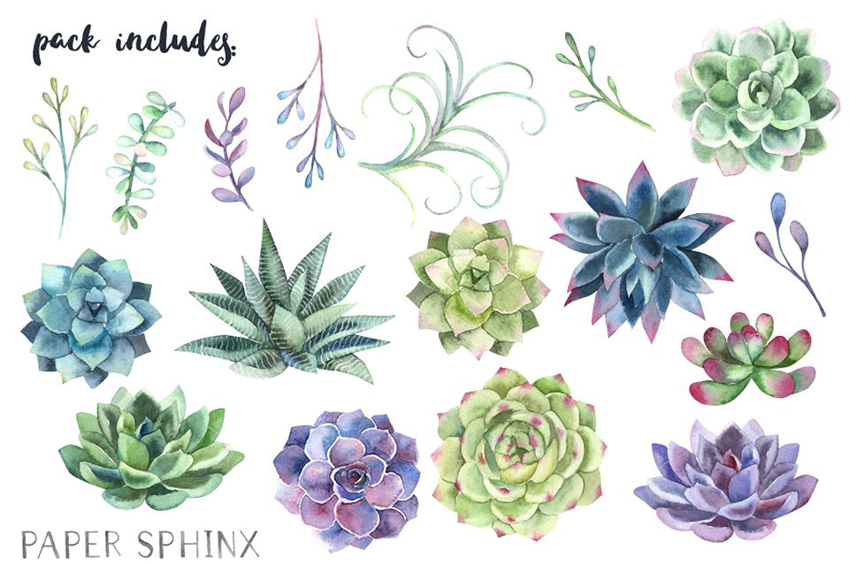 Succulents clipart banner transparent library Watercolor Succulents Clipart FREE DOWNLOAD! on Behance banner transparent library
