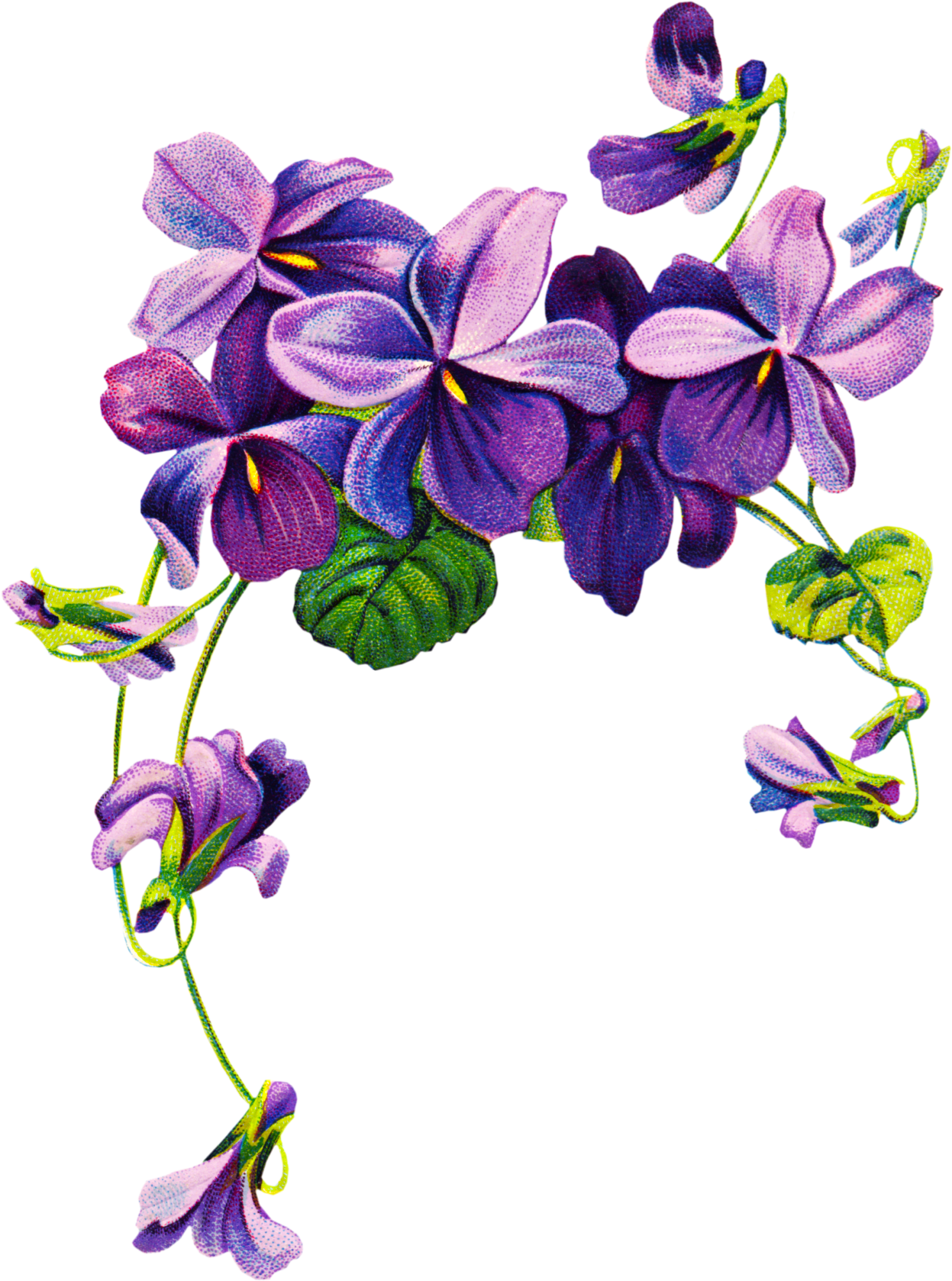 Summer flowers in purple and fuschia clipart vector library stock Violet Flower Tattoo Drawing | Free Clipart, Vintage ... vector library stock