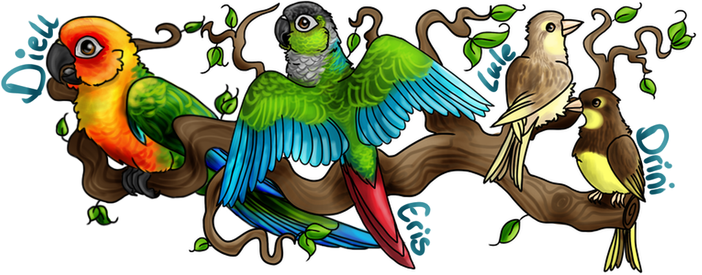 Sun conure clipart png graphic free Difference between male and female sun conures? | Avian Avenue ... graphic free