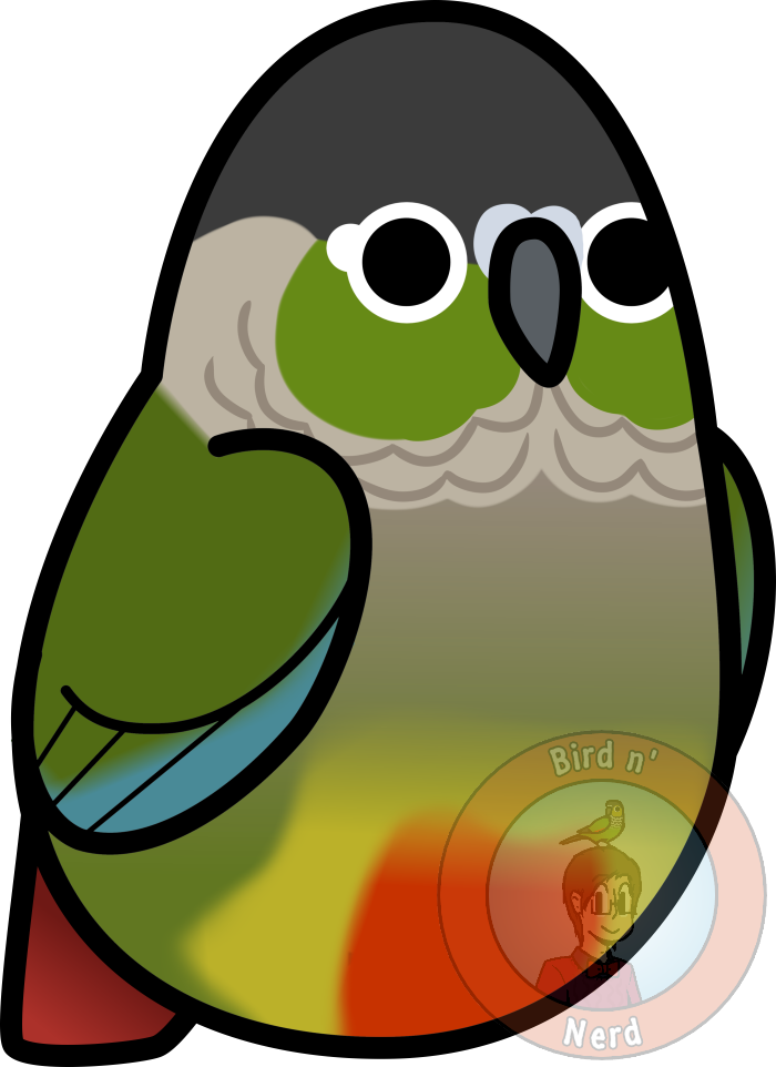 Sun conure clipart png clip art black and white Too Many Birds! - Green Cheeked Conure by MaddeMichael on DeviantArt clip art black and white