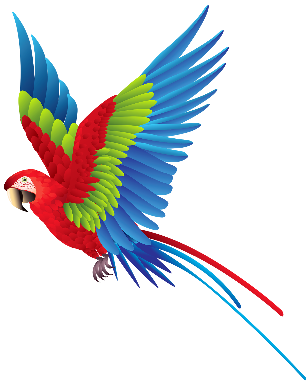 Sun conure clipart png clip art transparent download Parrot PNG images and Clipart free download clip art transparent download