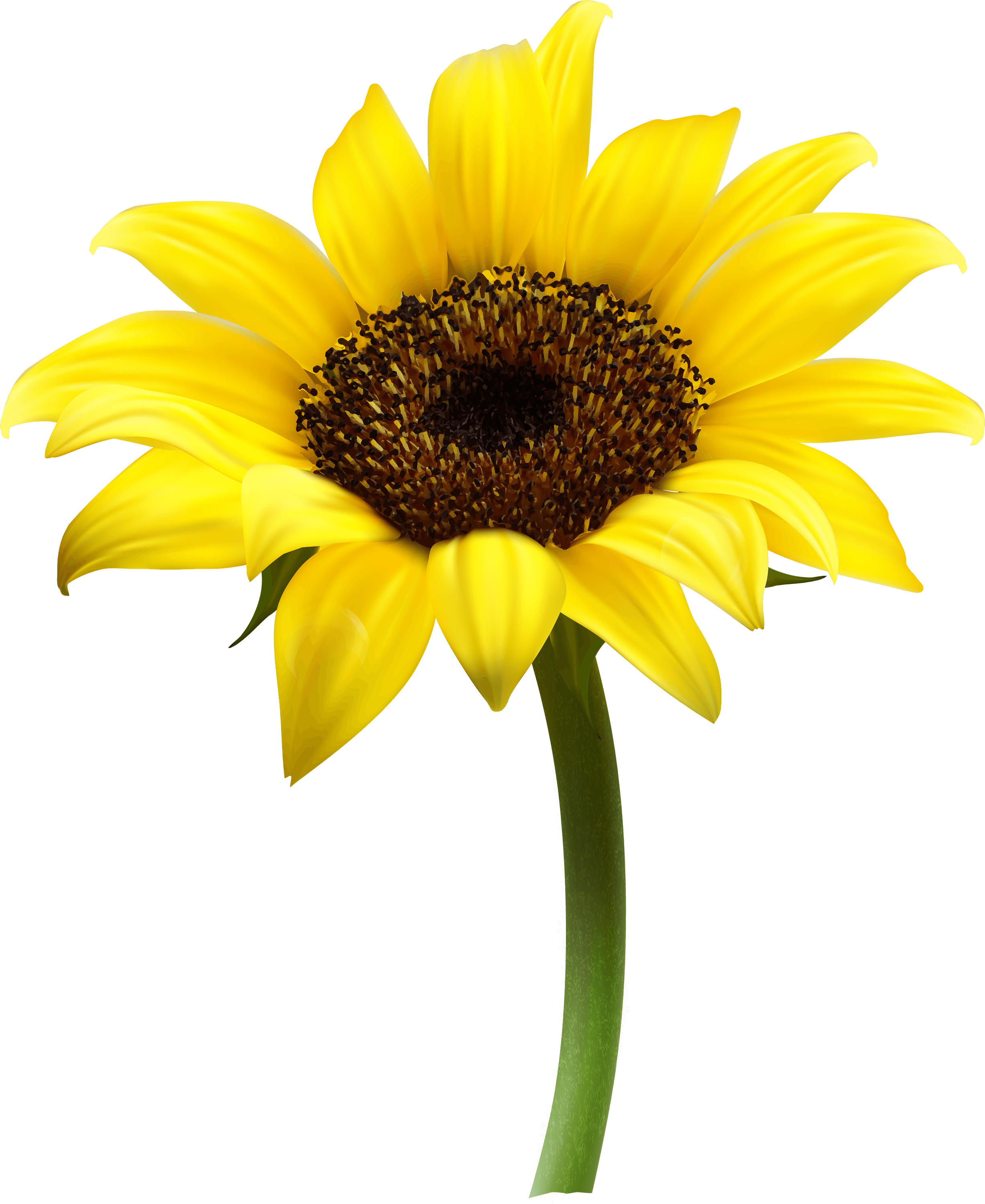 Sun flower seed clipart png royalty free Sunflower Single transparent PNG - StickPNG png royalty free