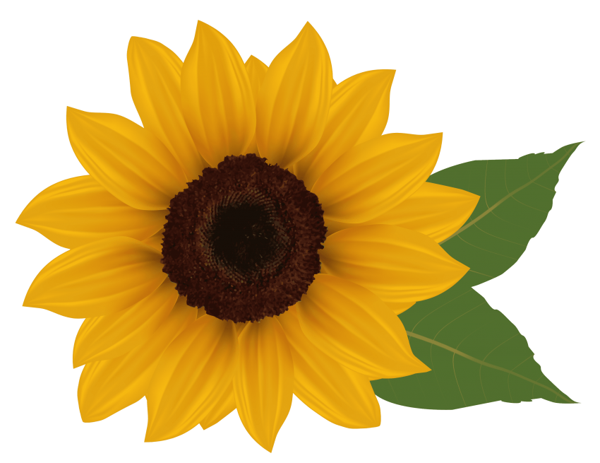 Sun flower seed clipart jpg library library sunflower png - Free PNG Images | TOPpng jpg library library