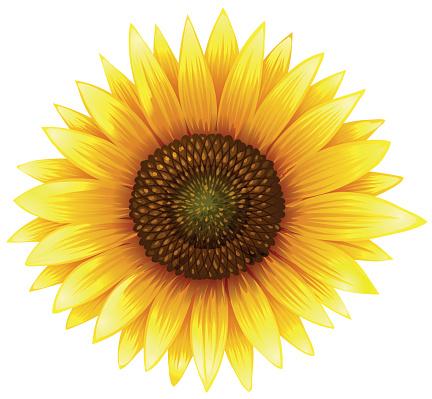 Sunrflower clipart clipart black and white download Sunflower clipart clipground jpg - ClipartPost clipart black and white download