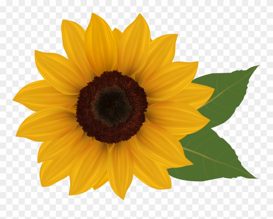 Sunflower background clipart banner free stock Clip Art Sunflowers - Sunflower With Transparent Background ... banner free stock