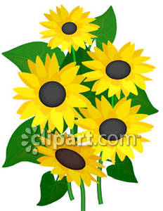 Sunflower blossom clipart clip art royalty free download Bunch of Sunflower Blossoms - Royalty Free Clipart Picture clip art royalty free download