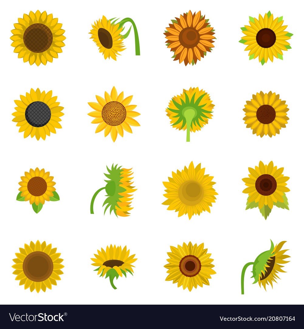 Sunflower blossom clipart image library download Sunflower blossom icons set isolated image library download