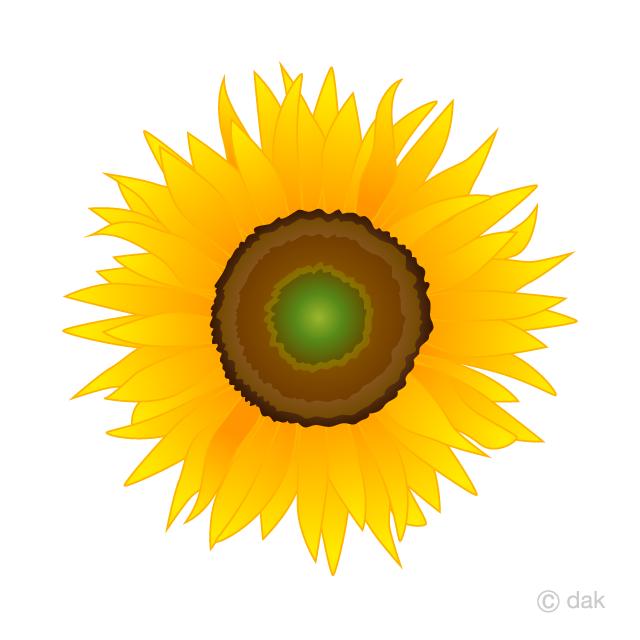 Sunflower blossom clipart clip art download Girasol Gratis Dibujos Animados Imágene|Illustoon ES clip art download
