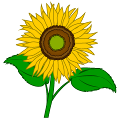 Sunflower blossom clipart clip free download Sunflower Flower and Leaves Clipart Free Picture|Illustoon clip free download