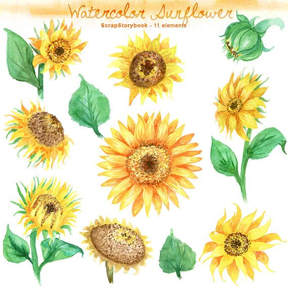 Sunflower cake clipart picture library stock Watercolor Sunflower Set - digital printable clipart - 300 ... picture library stock
