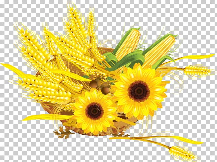 Sunflower cake clipart png black and white library Common Sunflower Maize Cereal Wheat Press Cake PNG, Clipart ... png black and white library