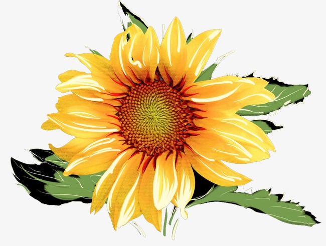 Sunflower cake clipart graphic transparent stock Sunflower Watercolor at PaintingValley.com | Explore ... graphic transparent stock