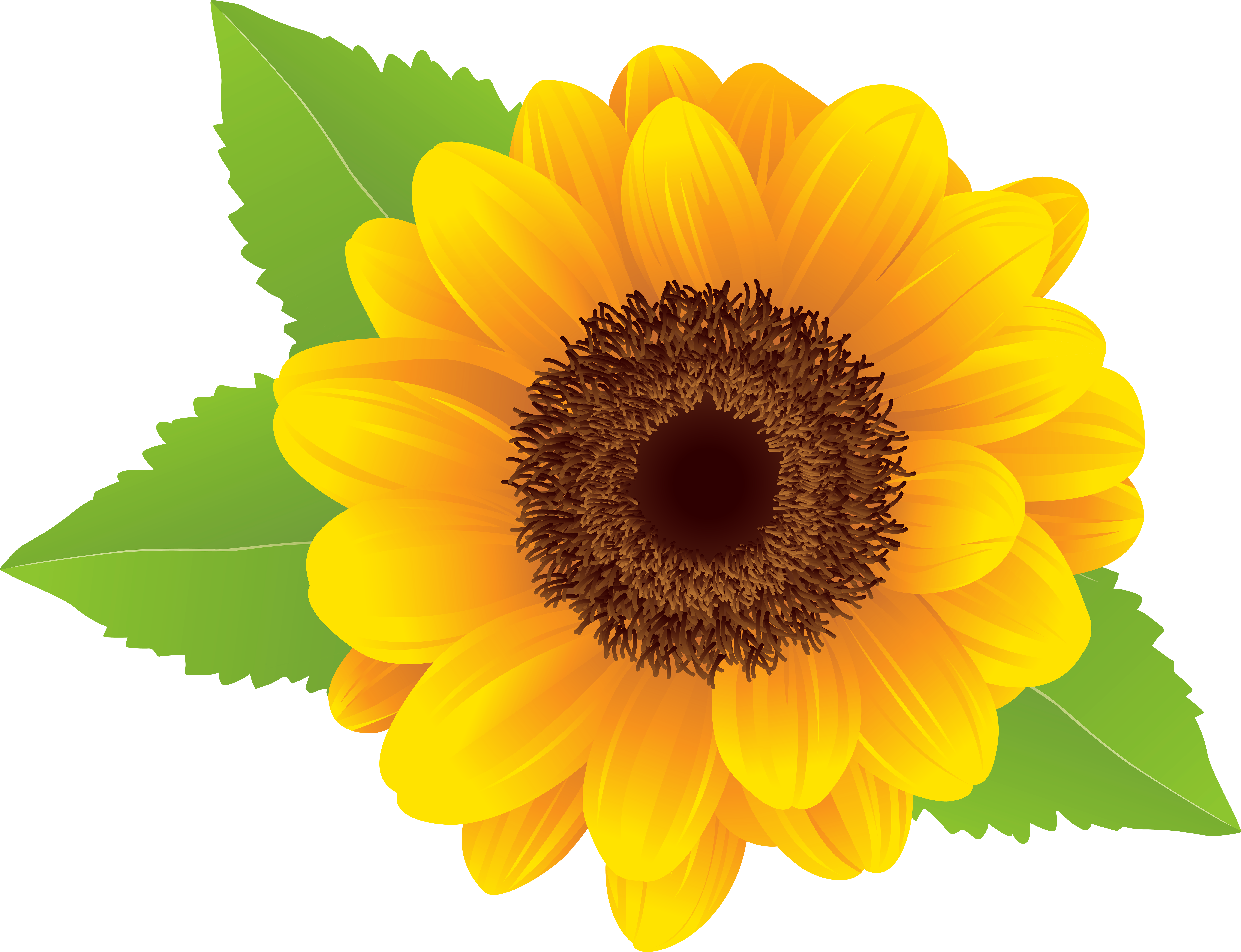 Sunflower cake clipart banner library download HD Sunflower Png Clip Art Image , Free Unlimited Download ... banner library download