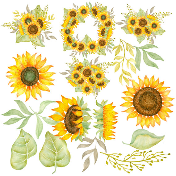 Sunflower clipart for wedding svg royalty free library Sunflower clipart Watercolor sunflowers clipart Hand painted ... svg royalty free library