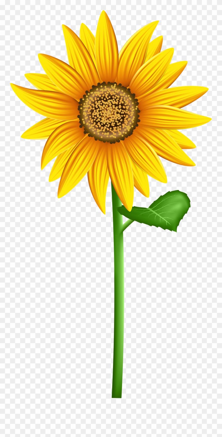 Sunflower clipart transparent banner stock Transparent Background Sunflower Clipart - Png Download ... banner stock