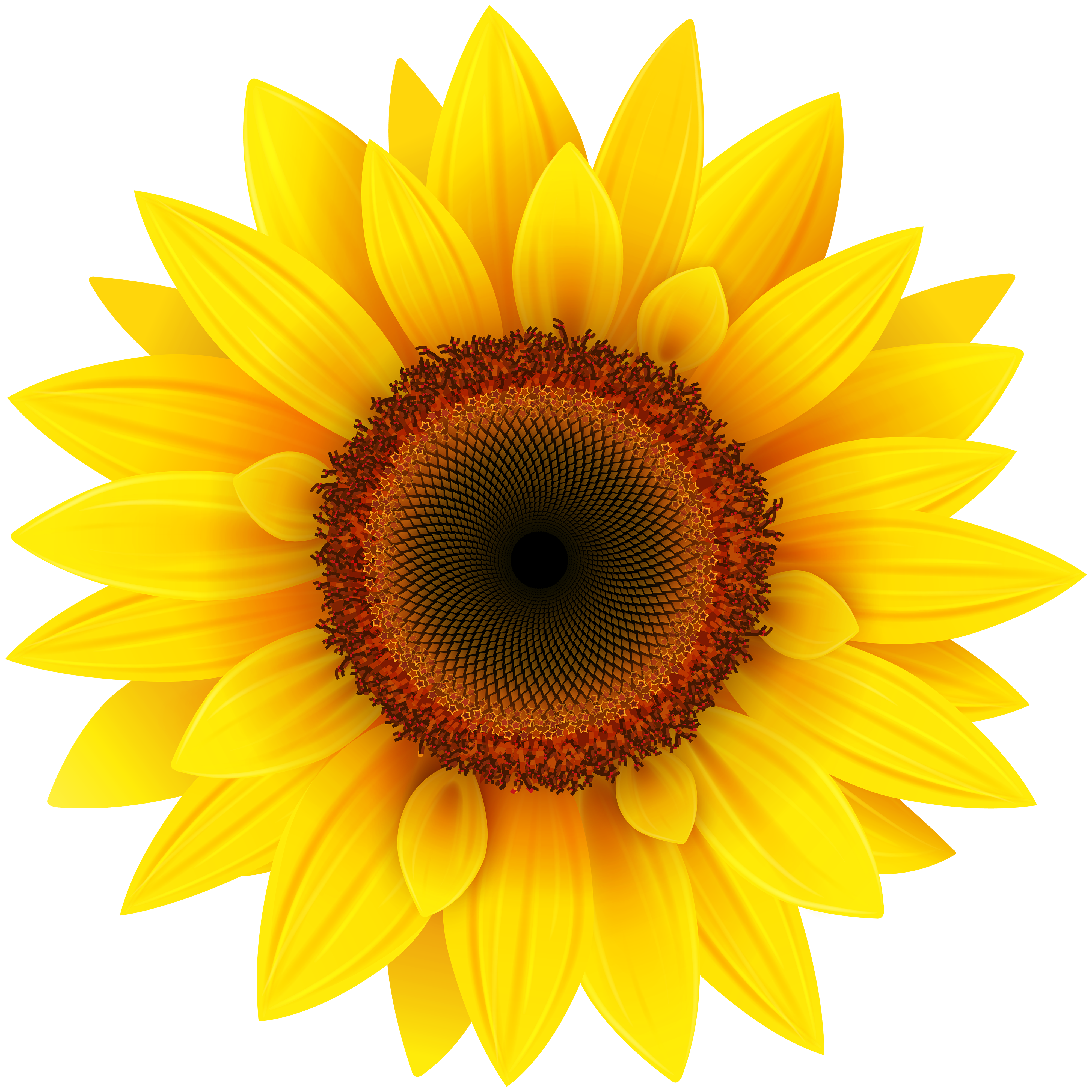Sunflower clipart transparent svg library download Pin by romany on rpg | Sunflower clipart, Sunflower png ... svg library download