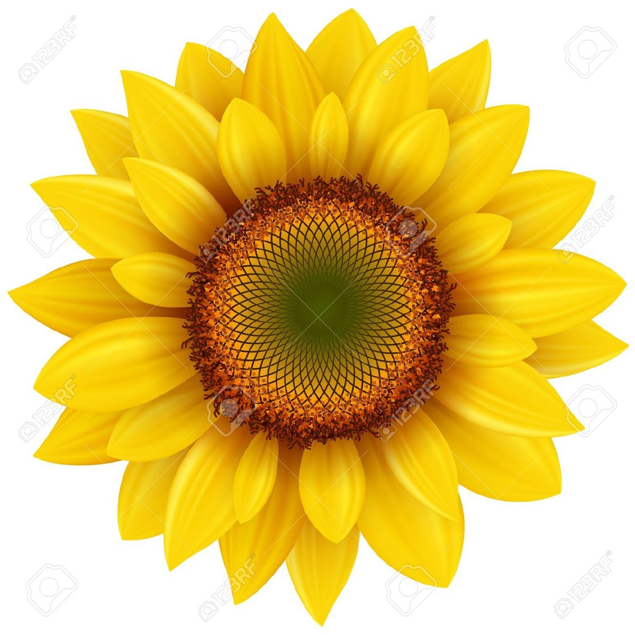Sunflower clipart vector png freeuse download Stock Vector | Puncture Wounds & Permanent Art | Sunflower ... png freeuse download