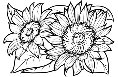Sunflower coloring clipart clipart free Sunflowers coloring page   Free Printable Coloring Pages clipart free