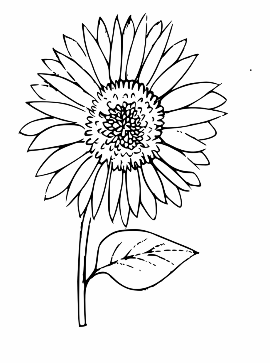 Sunflower coloring clipart clip black and white stock Outline Sunflower Coloring Plant Free Picture - Sun Flower ... clip black and white stock