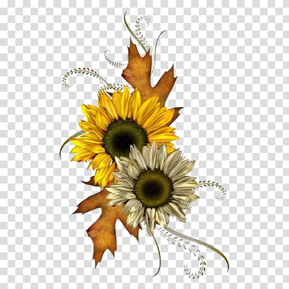 Sunflower fall clipart watercolor graphic stock Common sunflower Autumn , chrysanthemum transparent ... graphic stock