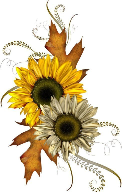Sunflower flowers and leaves clipart image Sunflower free top fall clip art free clipart image ... image