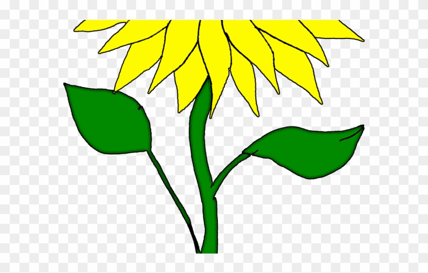 Sunflower flowers and leaves clipart image freeuse stock Drawn Sunflower San Flower Clipart (#2980647) - PinClipart image freeuse stock