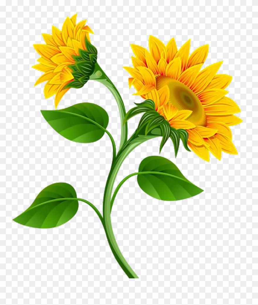 Sunflower garland clipart jpg royalty free download Garland Clipart Marigold - Sunflower Flower Clip Art - Png ... jpg royalty free download