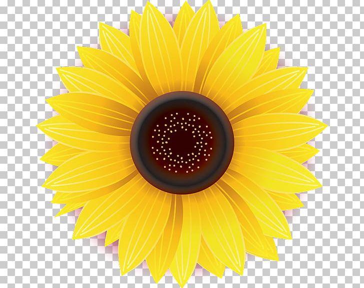 Sunflower stock clipart