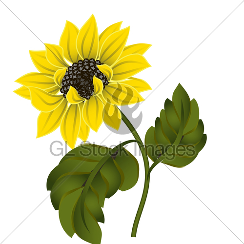 Sunflower stock clipart clip free Vector Graphics Clipart Sunflower Flower · GL Stock Images clip free