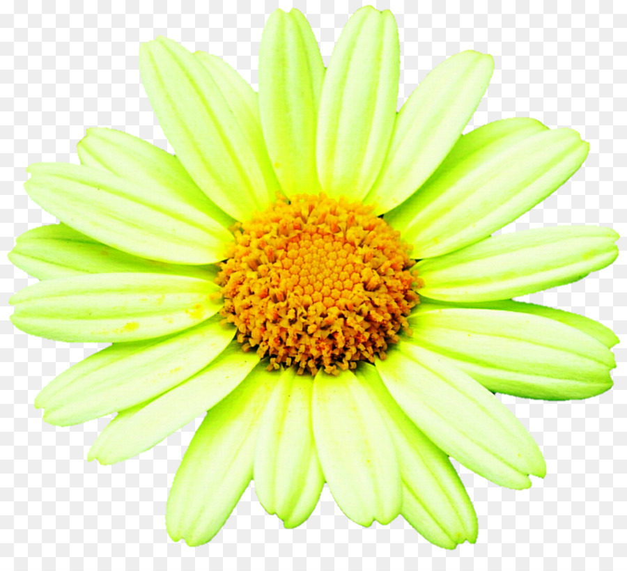 Sunflower stock clipart vector black and white stock Flower, Daisy, transparent png image & clipart free download vector black and white stock