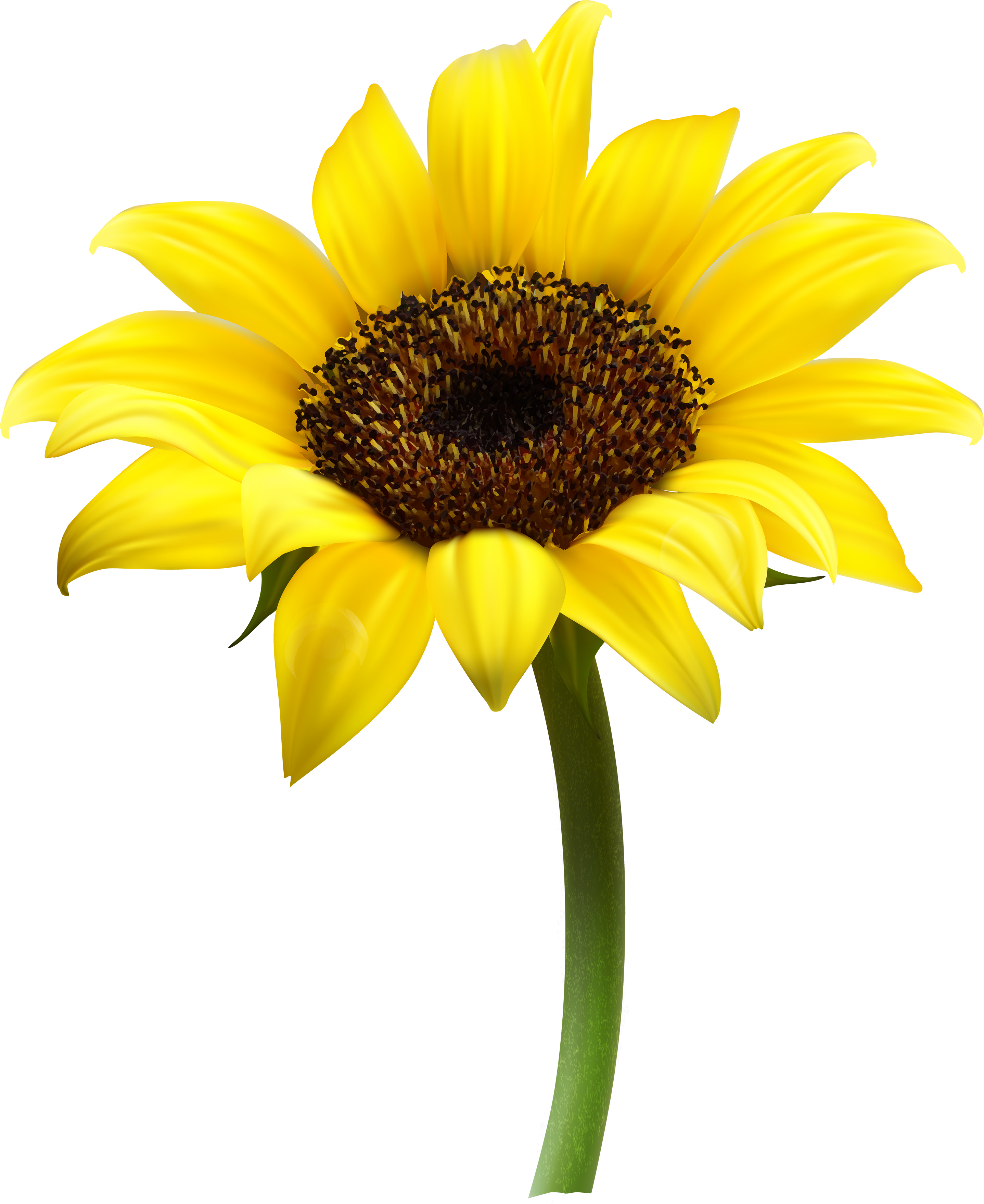 Sunflower sun clipart image stock Sunflower PNG images free download image stock