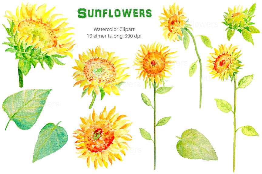 Sunflower watercolor clipart picture black and white download Watercolour sunflowers with long stems printable instant download scrapbook  spring flowers picture black and white download